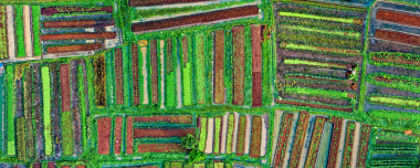 cluster-based approach in crop monitoring