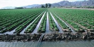 Furrow irrigation